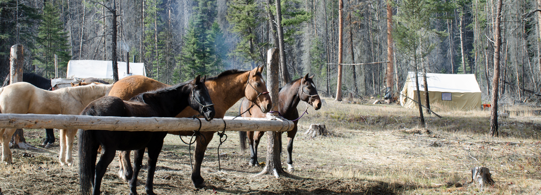 Horses-in-corral-at-elk-camp