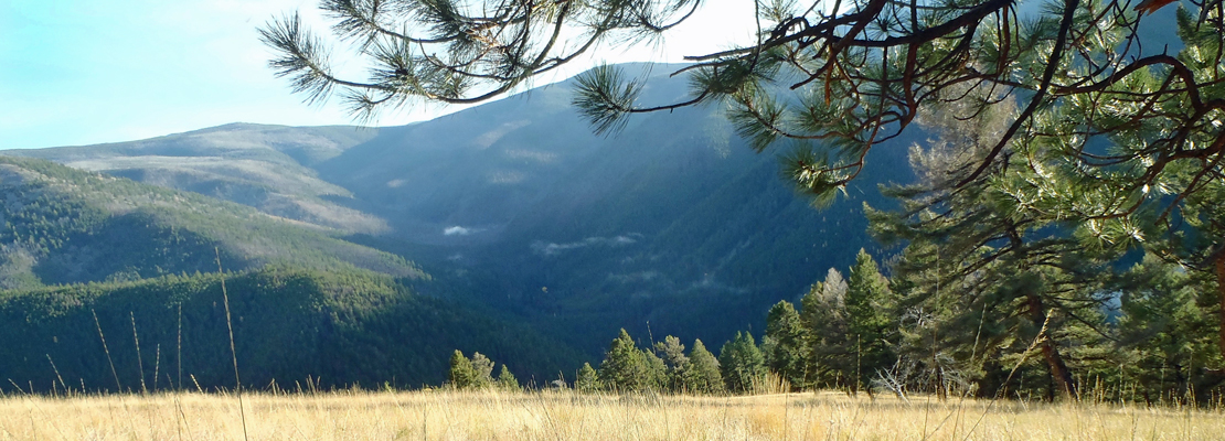 Meadow-Elk-Hunting-in-Montana-Rock-Creek